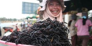 Weirdest Foods From Around the World