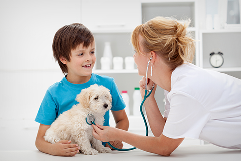 Ask your Animal Doctor