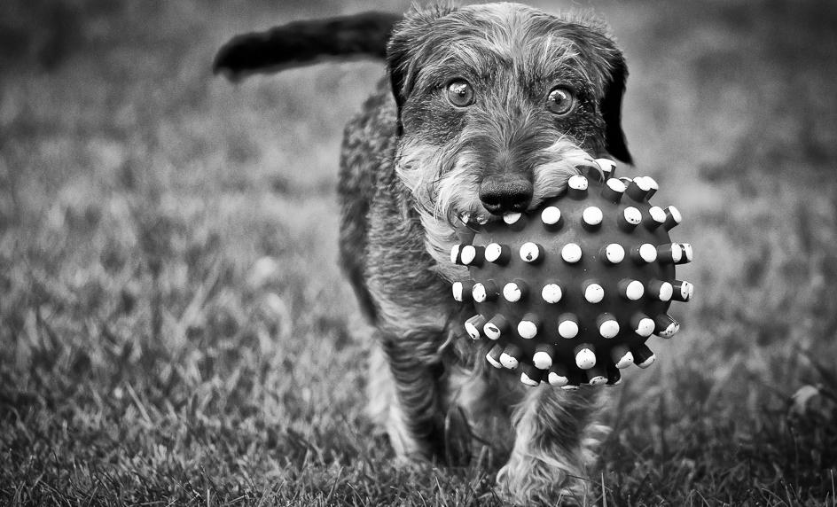 Dog With Treats