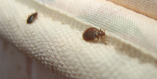 Don't Let the Bed Bugs Bite: Busting Bed Bugs and Keeping Your Family Bite-Free