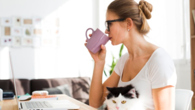 Photo of 5 No-Brainer Productivity Tips for Work from Home People