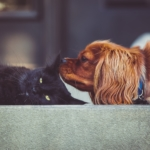 apartment pets