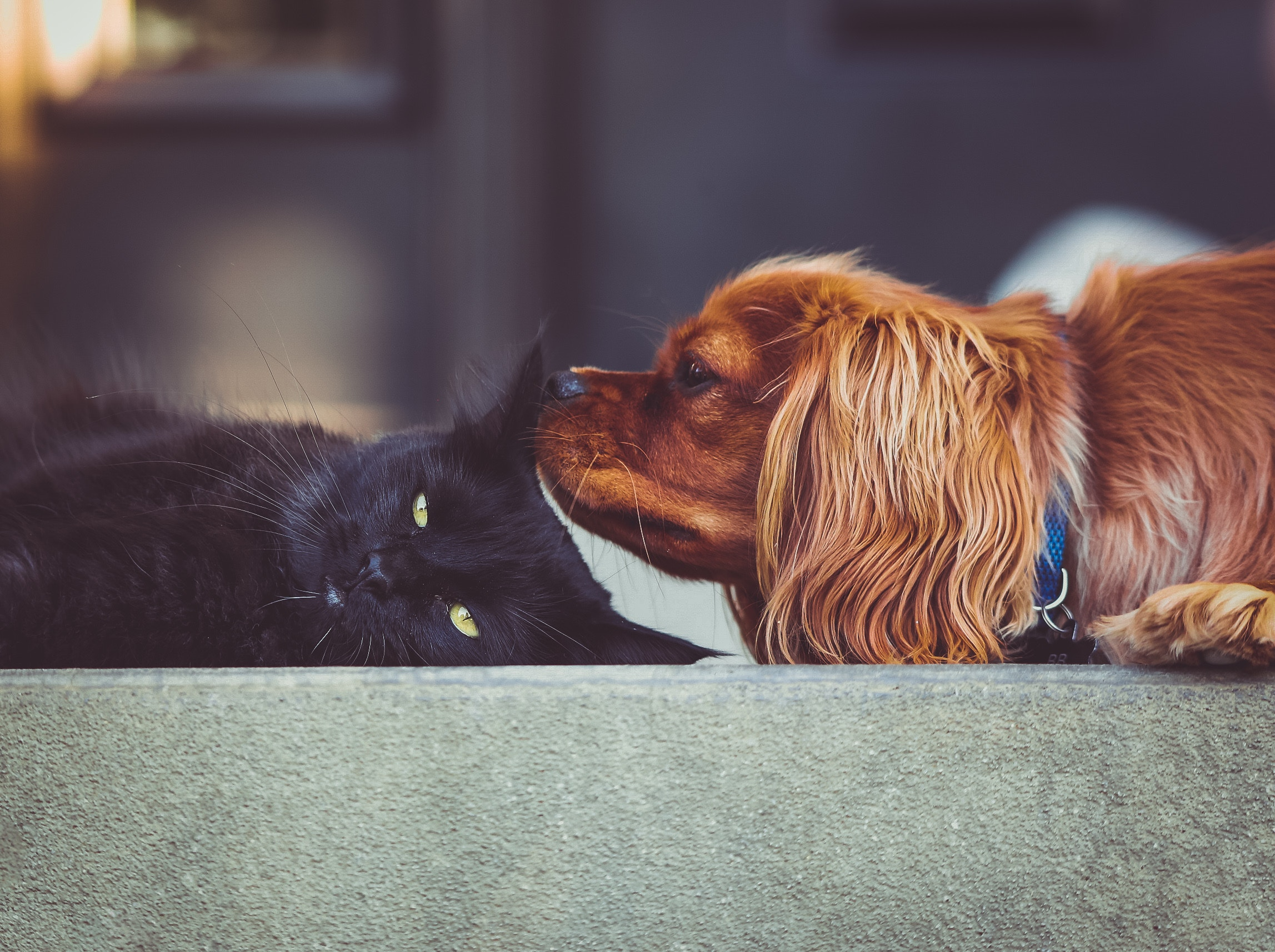 Photo of Perfect Pets That Are Great For Apartment Life
